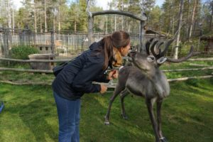 Kissing Reindeer © NTT